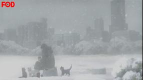 ハチミツとクローバーII 第09話【FOD】