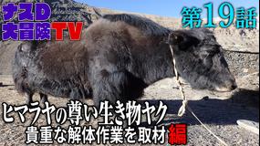 ナスD大冒険TV 【vol.19】ヒマラヤの尊い生き物「ヤク」貴重な解体作業を取材 編(2020/09/16放送分)