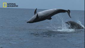 クジラたちの深海への旅
