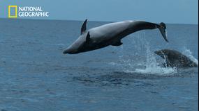 クジラたちの深海への旅/吹替