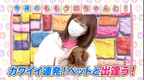 ももクロちゃんと! ももクロちゃんとペット(2021/08/20放送分)