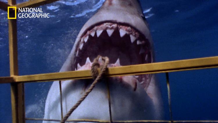 もしもの時の生存マニュアル「サメに襲われたら」/字幕