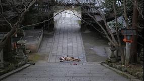 科捜研の女 season12 第09話(最終話)