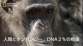 人間とチンパンジー:DNA2%の相違/吹替